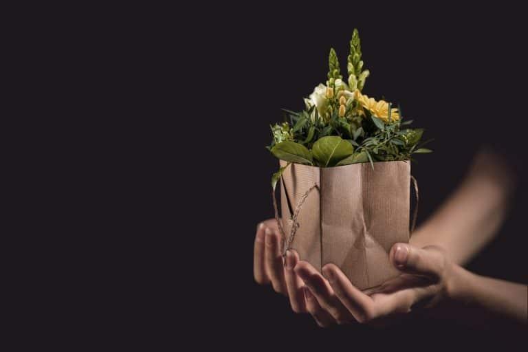 Contributi per lo sviluppo in Friuli Venezia Giulia: quando crescere è una possibilità