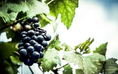 L'uva? Passa. L'ispirazione? Resta! | Idee settembrine per il punto vendita